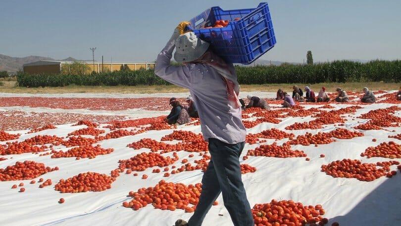 Mevsimlik işçiler hangi haklara sahip?