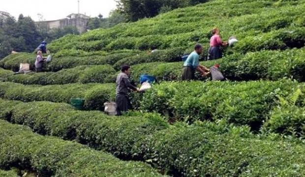 Mevsimlik işçilere işsizlik sigorta primi ödenecek mi?