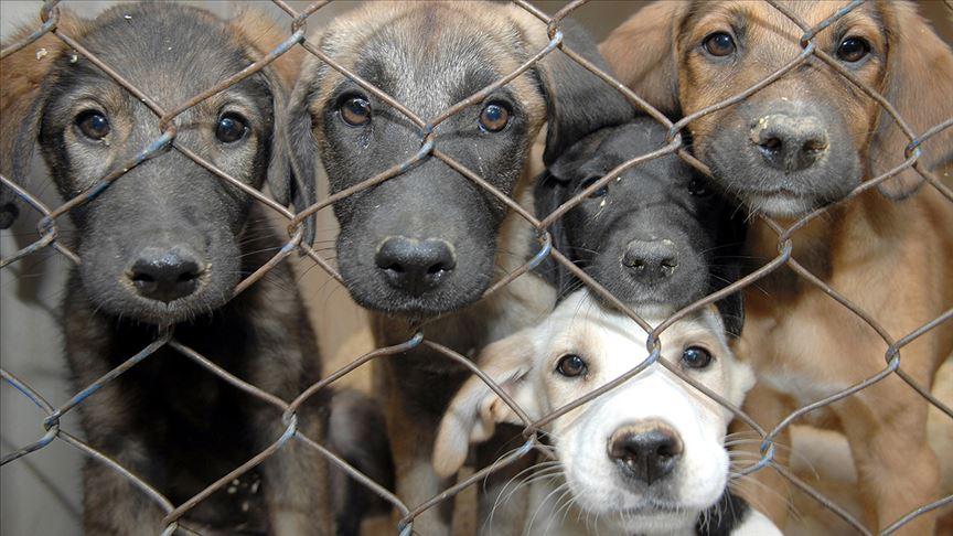 Barınaktaki hayvanların öldürüldüğü iddiasına soruşturma